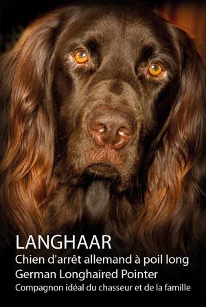 Langhaar-Portrait-Template-300